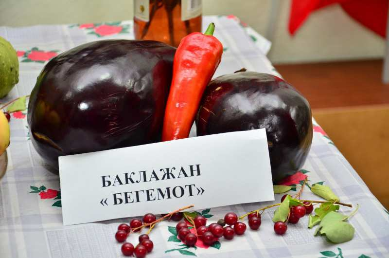 Баклажан Бегемот