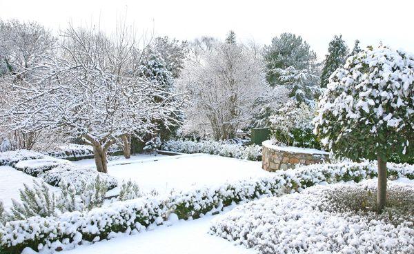 Сад в январе