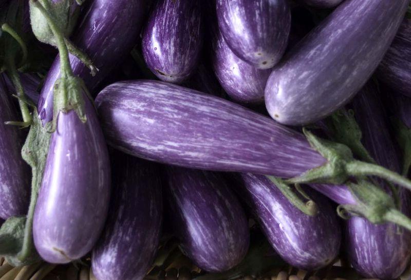 Баклажан фиолетовое чудо описание и характеристика сорта урожайность с фото